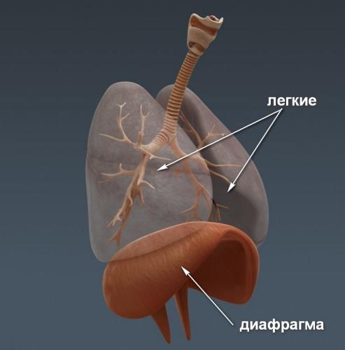 Диафрагмальное дыхание при панических атаках