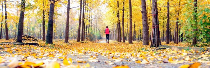 Осенняя мотивация дыхательная гимнастика